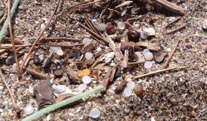海岸に打ち寄せられたレジンペレットの画像